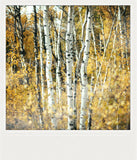 CLEARANCE <br> Metallic Polaroid Magnet <br>Aspens in Alberta