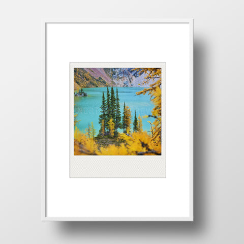 Metallic Polaroid Magnet <br>Autumn Larches <br> Canada