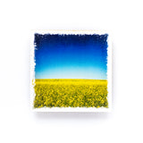 "Canola Field In Bloom <br>Birch Wood Photo Coaster <br> 4x4"" Matte Finish"