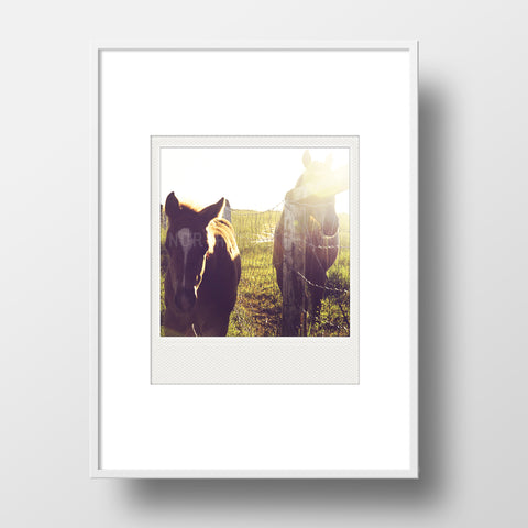 Discontinued <br>Metallic Polaroid Magnet <br>Alberta Horses at Sunset