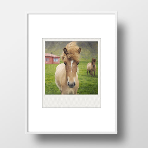 CLEARANCE<br> Metallic Polaroid Magnet <br> Icelandic Colt