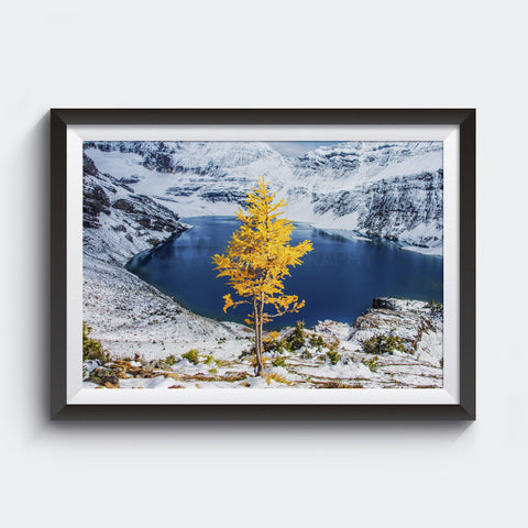 September Snowfall <br> Yoho Nat'l Park Canada <br>Limited Edition Archival<br> Fine Art Chromogenic Print