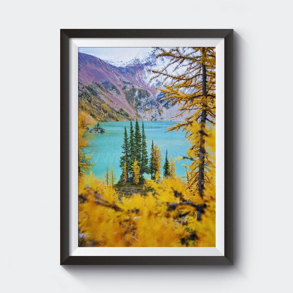 Larch Trees + Magical Lake<br> Canada <br>Limited Edition Archival<br> Fine Art Chromogenic Print
