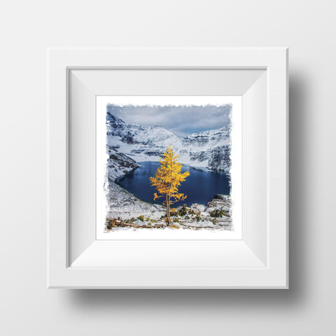 "CLEARANCE 5x5"" Fine Art Print <br>Lone Larch Tree in Autumn Snowfall<br> Metallic Finish"