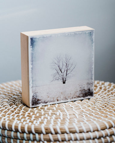 "CLEARANCE Lone Pine in Winter<br> 5x5"" Signature Glossy Art Block  <br> Pine Wood Edges"