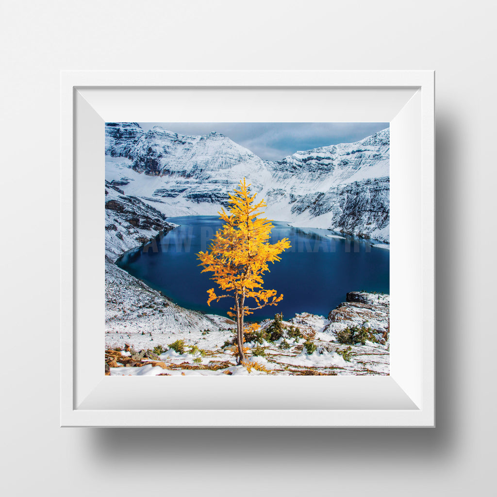 "Limited 6x7"" Print <br> Yoho National Park <br> Satin Finish"