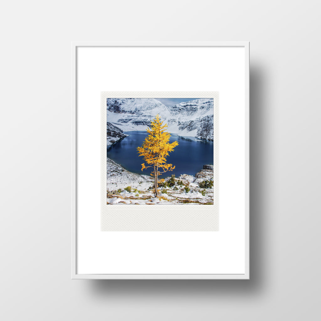 Metallic Polaroid Magnet <br> Lone Larch Yoho National Park