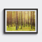 Forest (metsä) in Finland <br>Archival Fine Art Chromogenic Print<br>