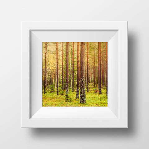 "SALE 12x12"" Print <br>Forest (metsä) in Finland <br> Metallic Finish"