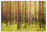 Forest (metsä) in Finland  <br>Limited Edition Archival Fine Art Chromogenic Print