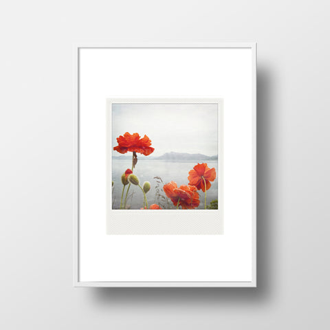 CLEARANCE <br> Metallic Polaroid Magnet <br>Poppies Along the Ocean
