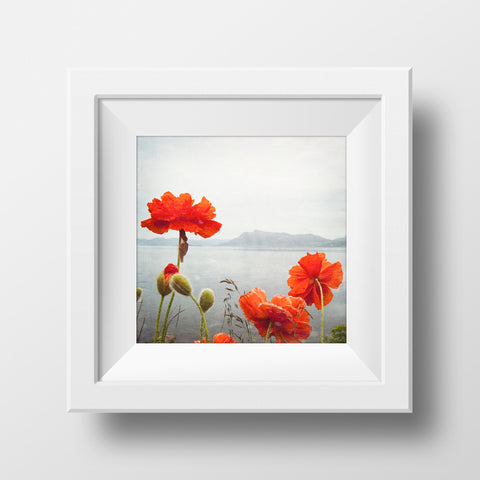 SALE  Print <br>Poppies Along the Ocean <br> Metallic Finish + Various Sizes