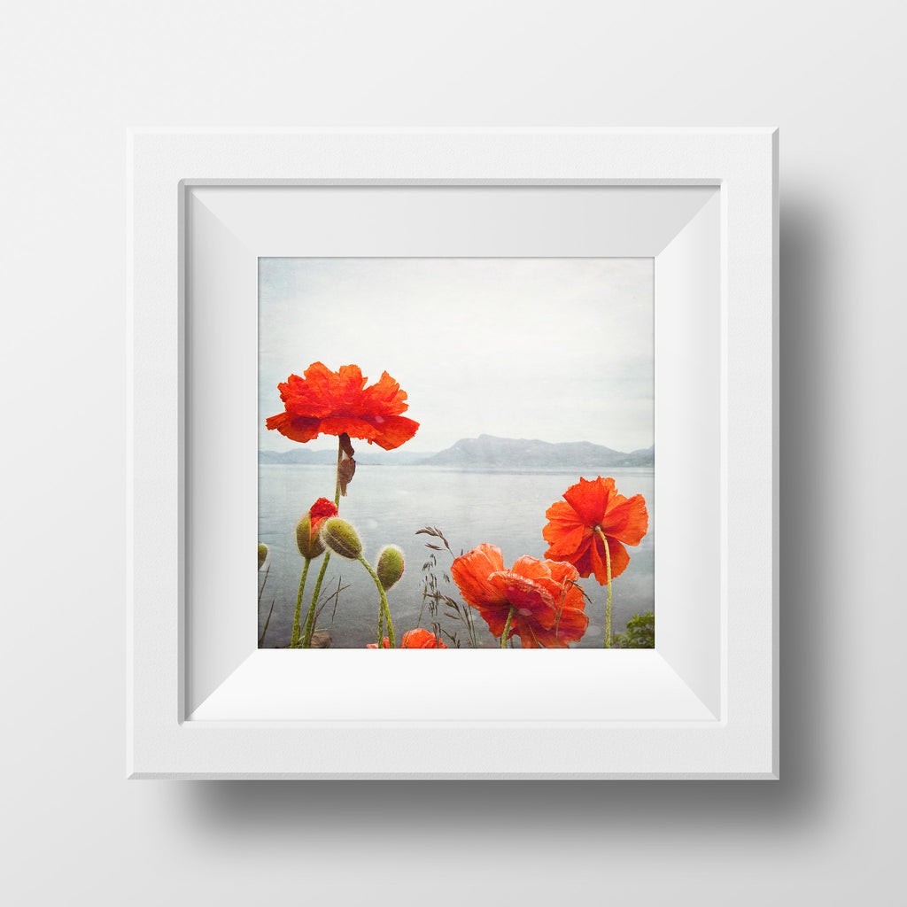 Wild Poppies <br> Stad Norway <br>Archival Fine Art Chromogenic Print