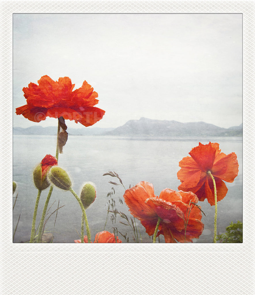 Polaroid Magnet <br> Coastal Poppies