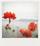 Metallic Polaroid Magnet <br> Coastal Poppies