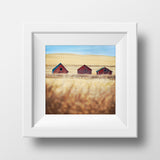 "CLEARANCE 12x12"" Print<br>3 Farm Buildings Saskatchewan<br> Metallic Finish"