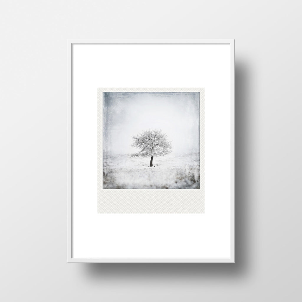 CLEARANCE Metallic Polaroid Magnet <br>Tree Study No. a
