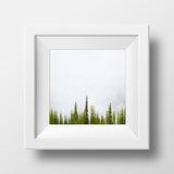 Sub Alpine Fir + Fog <br> Mt Sale BC <br>Archival Fine Art Chromogenic Print