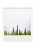 Metallic Polaroid Magnet <br>Fir Trees + Fog