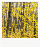 CLEARANCE Metallic Polaroid Magnet <br>Sugar Maples