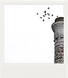 Discontinued <br> Large Metallic Polaroid Magnet <br> Birds at Tower