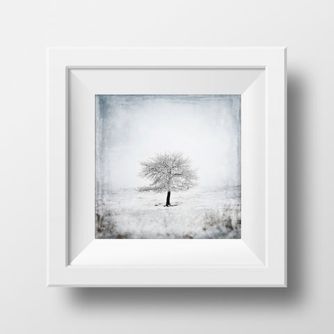 CLEARANCE Print <br> Lone Tree No. 2 <br> Various Finishes + Sizes
