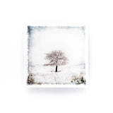 "Winter Tree Study No. 2 <br>Birch Wood Photo Coaster <br> 4x4"" Matte Finish"