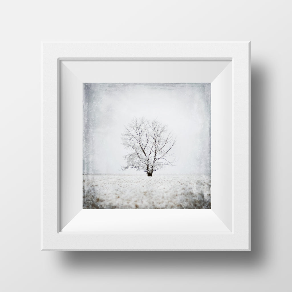 "SALE 5x5"" Print <br>Tree Study No. 1<br> Metallic Finish"