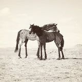 "Discontinued 8x8"" Print<br>Bleu Horses of Montana<br> Matte Finish"