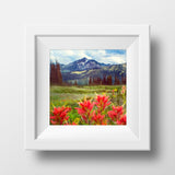 "SALE Print <br>Wildflowers in B.C<br> 12x12"" + Various Finishes"