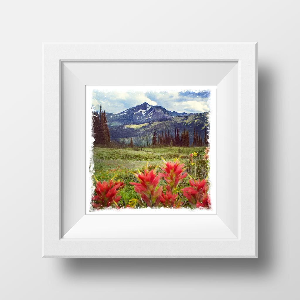"SALE 5x5"" Fine Art Print <br>Wildflowers in Summer<br> Metallic Finish"