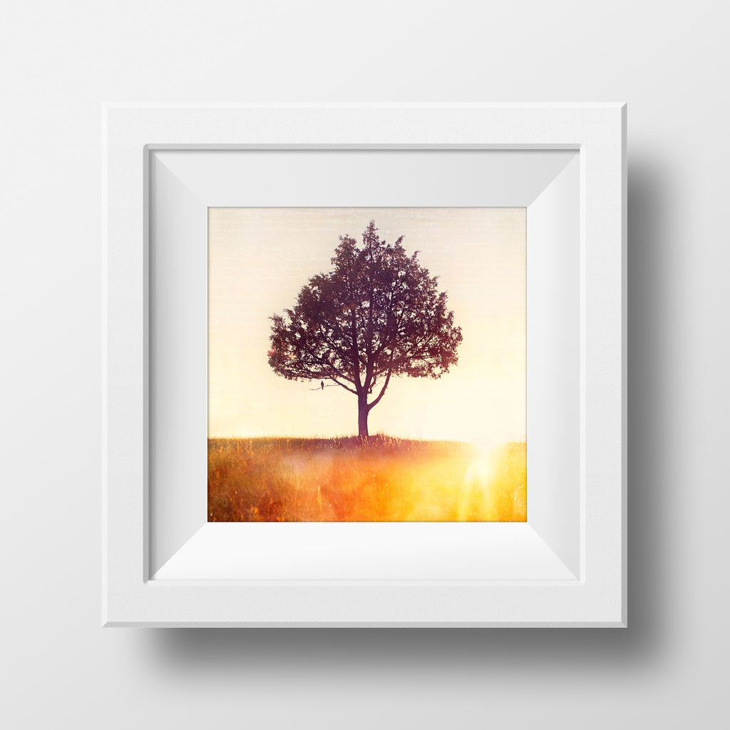 "SALE 8x8"" Print <br>Songbird + Pine<br> Various Finishes"
