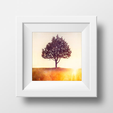"CLEARANCE 8x8"" Print <br>Songbird + Pine<br> Various Finishes"