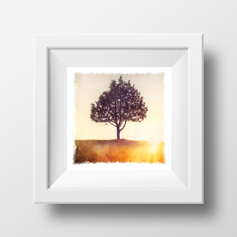 "CLEARANCE 5x5"" Fine Art Print <br>Lone Pine Tree <br> Metallic Finish"