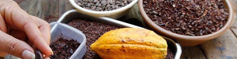 Benefits of Cacao consumption