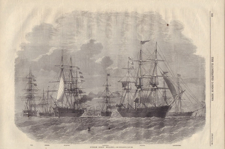 Dundee Screw Whalers by: London Illustrated News, 1861