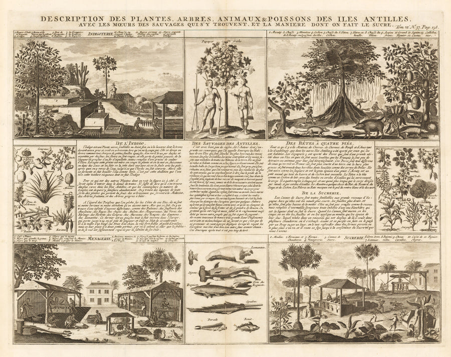 Description des Plantes, Arbres, Animaux...Antilles... By: Henri Chatelain Date: 1720 (Published) Amsterdam Size: 15 x 19.25 in - antique, map, Antilles