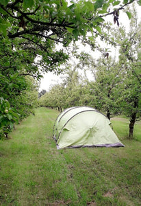 Orchard tent camping on the Cider farm
