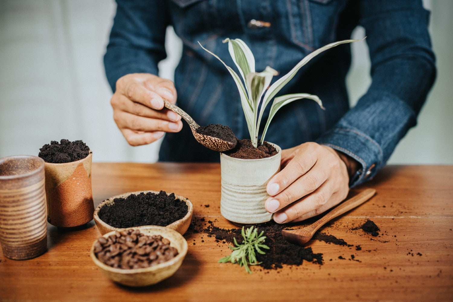 putting coffee grind in plants