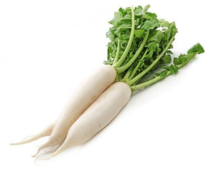 White Radish / Mooli 1pc