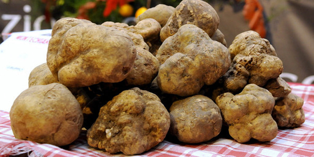 The Profood Guide to White Truffles – plus three quick and easy recipes