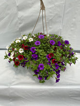 "Load image into Gallery viewer, 11"" Calibrachoa (Million Bells) Hanging Basket"