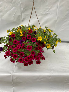 "11"" Calibrachoa (Million Bells) Hanging Basket"