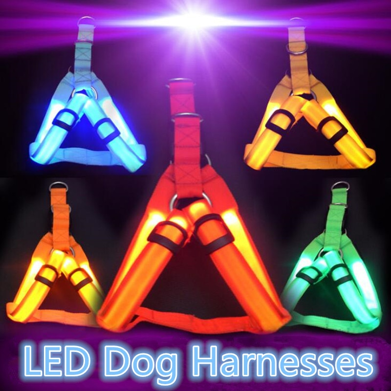 Light dog belt