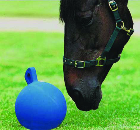 Roma Equine Play Ball