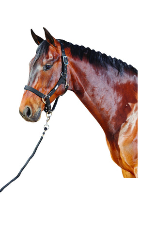 NEW Roma Nylon Headcollar with Neoprene Lining and Lead Set