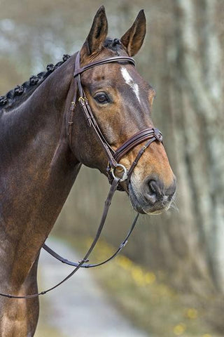 Mountain Horse Top Select Bridle