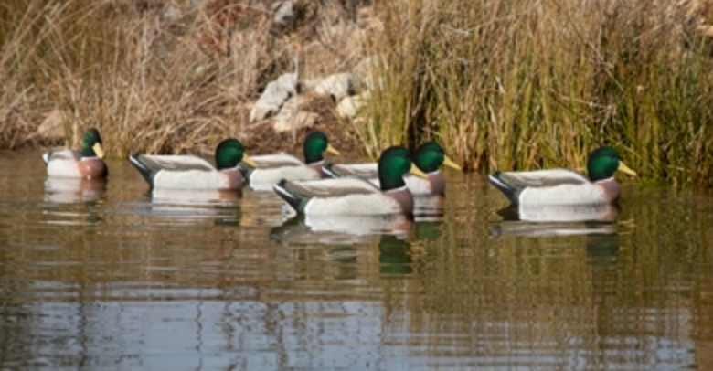 Battleship Mallard All Drake Pack, Foam Filled, Flocked Heads