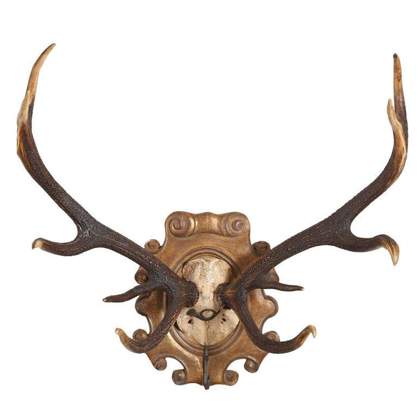 19th Century Habsburg Red Stag Trophy with Hook & Original Hunt Horn Hardware