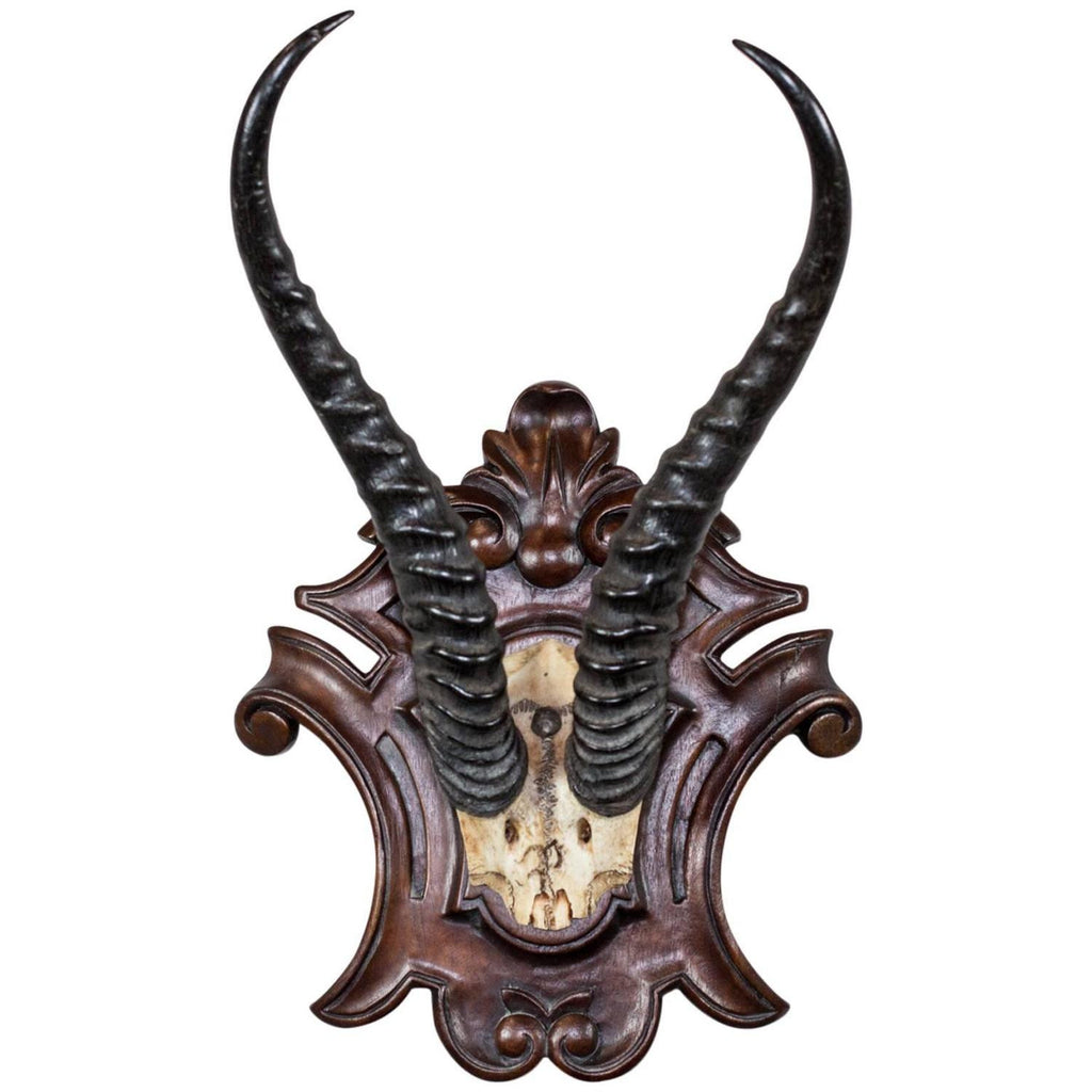 19th Century African Springbok Trophy Attributed to Thomas von Prince